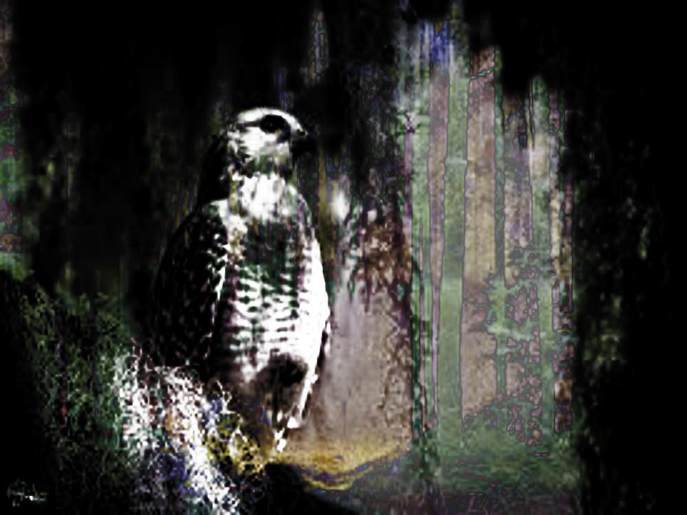Flowing Hawk