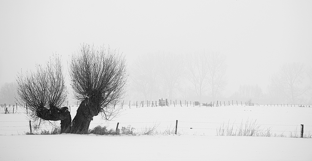 Willow-Snow-Fog