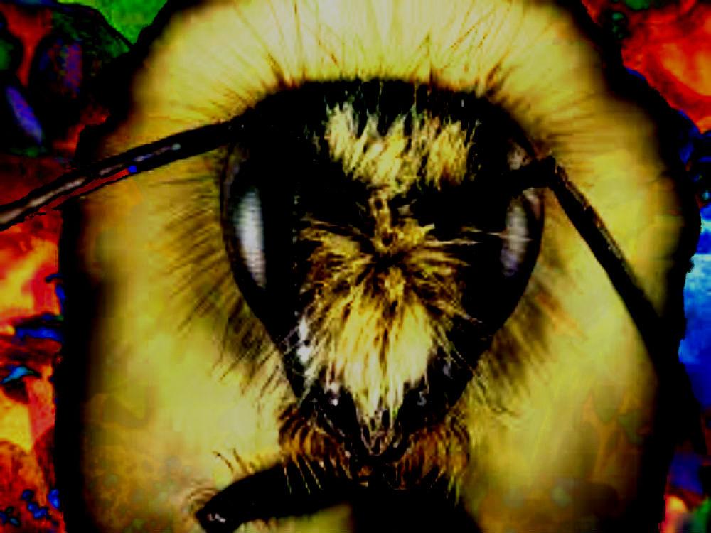 Bee's-666